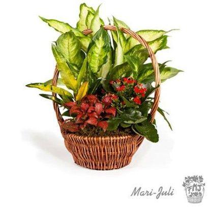 Ref.FMJ0008.Cesta de Mimbre con Plantas en tonalidades verdes y rojos.