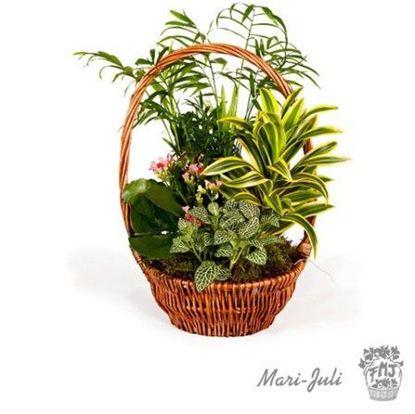 Ref.FMJ0012.Cesta de Mimbre con Plantas en tonalidades verdes.
