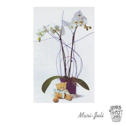 Ref.ES5ESP.Planta Orquidea Phalaenopsis Jarrón Peluche.Ref.