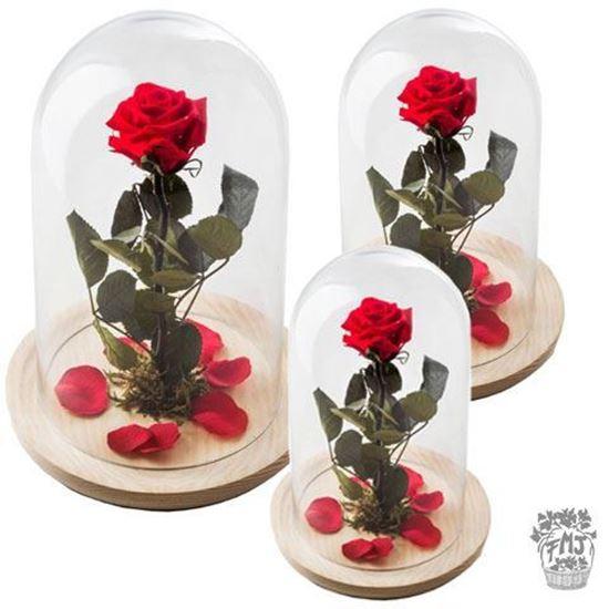 Imagen de  Ref.FMJ0130. Rosa encantada del amor eterno.(a partir de 15€)